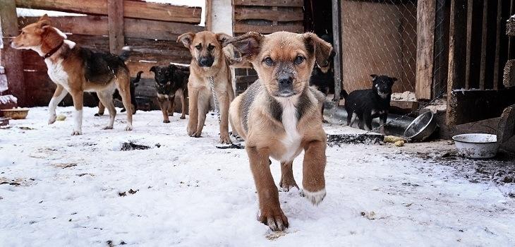 Органы МСУ Московской области получили полномочия по отлову и содержанию безнадзорных животных