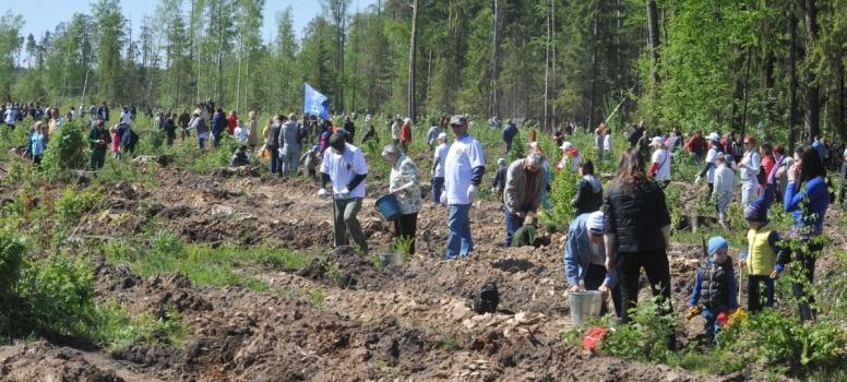 Алла Полякова: Необходима координация деятельности общественных и образовательных организаций для формирования полноценной экологической культуры